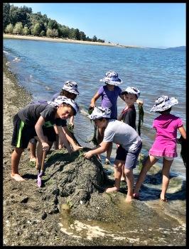 Seaweed Heap
