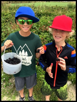 Blackberry Pickers